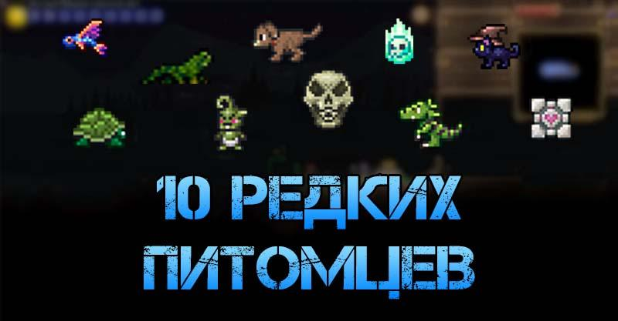 10 самых редких питомцев