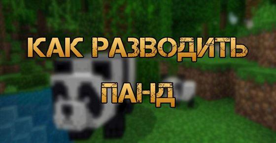 Как разводить панд в Minecraft